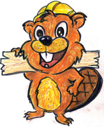 beaver drawing clip art